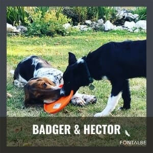 Badger and friend, Hector
