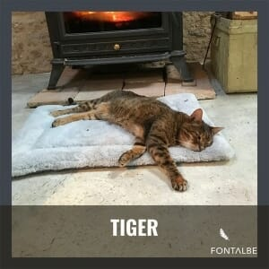 Tiger the cat in France